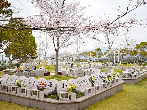 桜樹木葬 -区画風景-